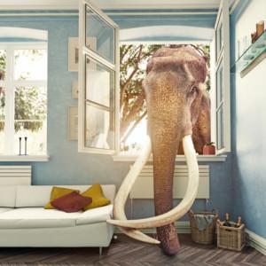 The Prenup Elephant and Mediation by Jennifer Safian